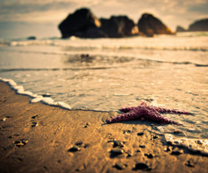 beach, starfish, and pretty image