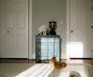 cats and vintage image