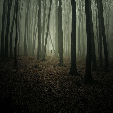 forest, tree, and woods image
