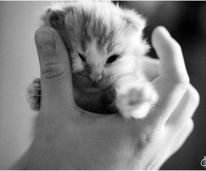 cute, cat, and hand image