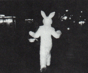 rabbit, bunny, and black and white image