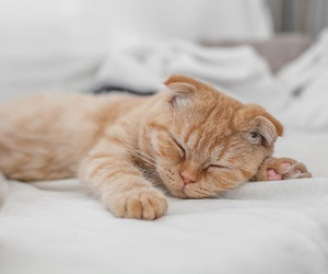 cat, cuddly, and cute image