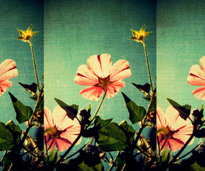 beauty, flowers, and photo image