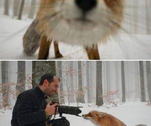 girl, cute, and fox image