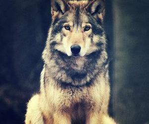 wolf, animal, and wild image