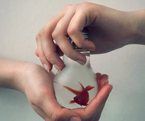 fish, hands, and photography image