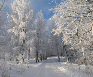 snow, trees, and white image
