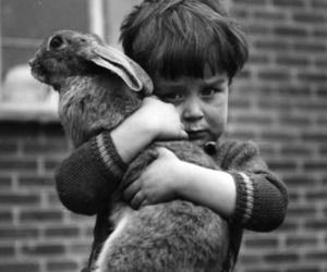 rabbit, boy, and bunny image