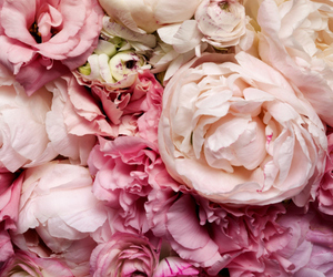beautiful, pink, and bloemen image