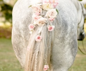 horse and flowers image