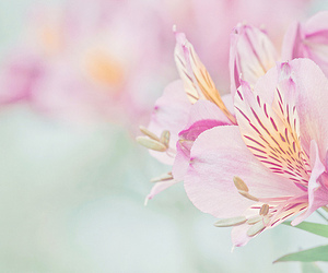 pink, pretty, and flowers' image