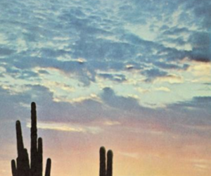 cactus, desert, and sunset image