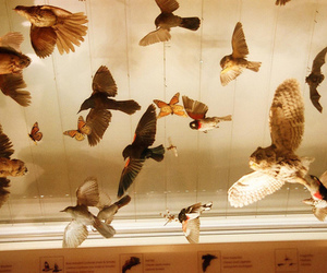 birds and butterfly image