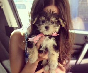 cute, dog, and girl image