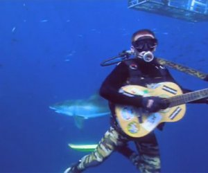 funny picture, cool picture, and guitar diver sharks image