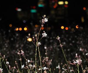 city, flowers, and lights image
