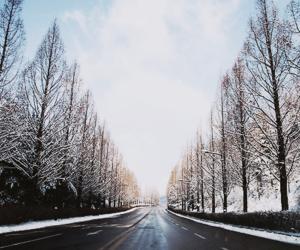 tree, beautiful, and road image