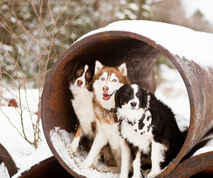 dog, dogs, and snow image