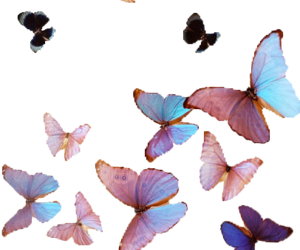 butterflies, photo, and love image