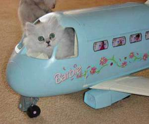 cat and barbie image