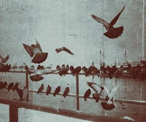 vintage and bird image