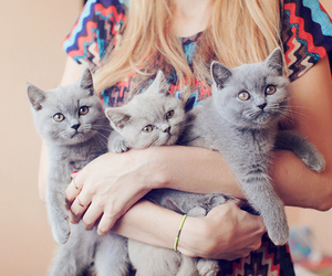 cat, cute, and grey image