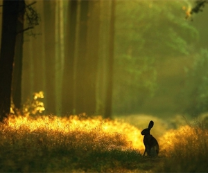 rabbit, bunny, and forest image