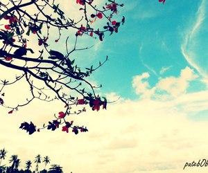 beach, blue sky, and sky image