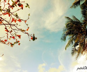 beach, sunset, and love image