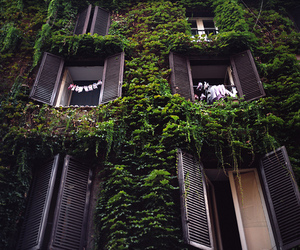 green, windows, and nature image