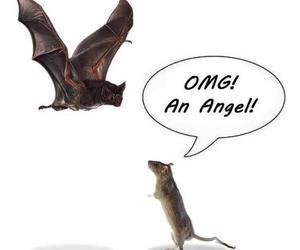 funny, bat, and angel image