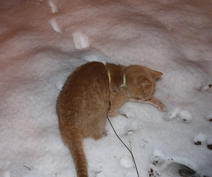 cat, hate, and snow image