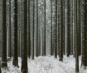 forest, tree, and snow image