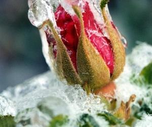 cold, winter wonderland, and ice image