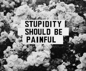 quote, text, and stupidity image