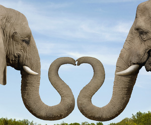 elephant, love, and heart image
