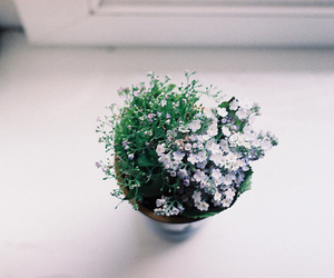 floral, flower, and hipster image