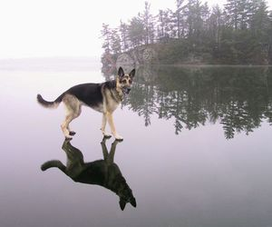 dog, water, and ice image