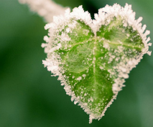 heart, green, and snow image