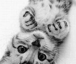 *-*, cat, and cute image