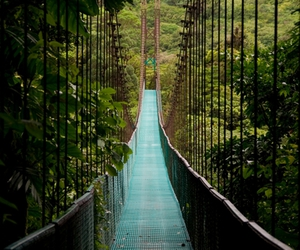 bridge and costa rica image