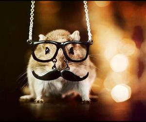 hamster, mustache, and animal image
