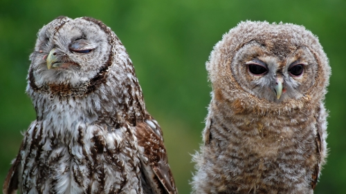 owl and owls image