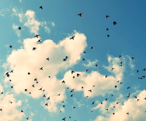 sky and birds image