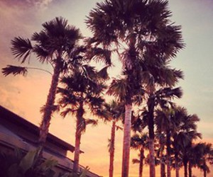 awesome, palms, and photography image