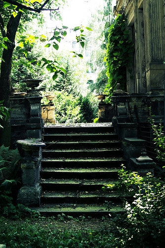 nature and stairs image