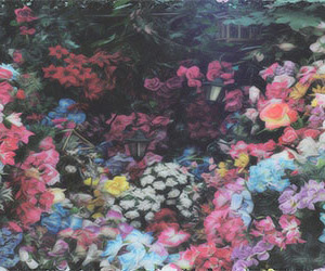 flowers and header image