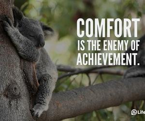 amazing, bear, and comfort image