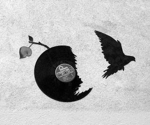 bird, black and white, and cool image