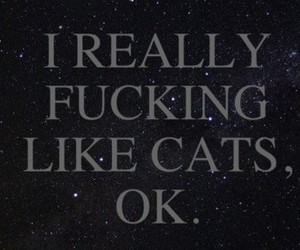 cat, text, and quote image